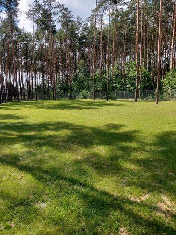 Pracę porządkowe w ogrodzie sprzątanie liści koszenie trawy