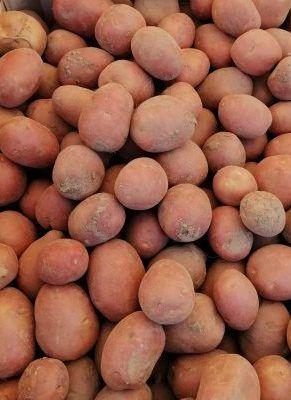 Ziemniaki sadzeniaki Bellarosa BIO 15kg