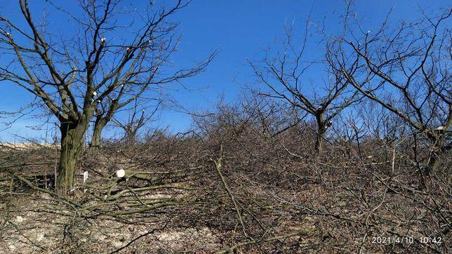 Gałęzie, drewno za darmo