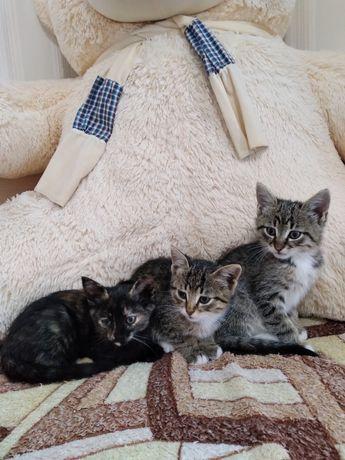 Маленькі кошенята 2 коти, 1 кішечка