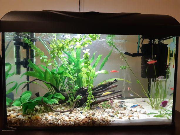 Akwarium z wyposażeniem lub same rybki