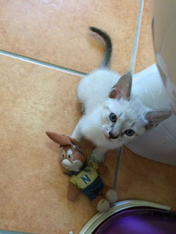 gatinho, macho, 2 meses
