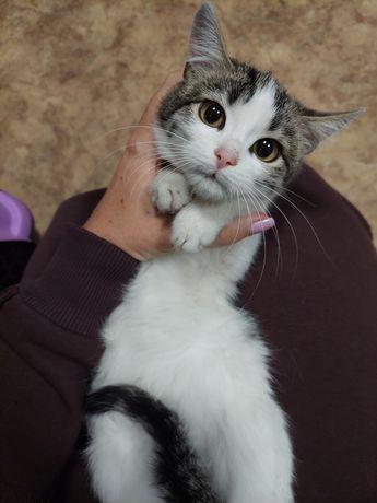 Котенок девочка Нюша очень ждет своего хозяина 3,5 мес.