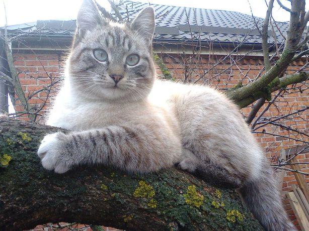 Пропал кот в поселке Гуты