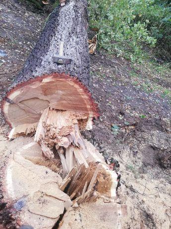 Wycinka drzew, rozbiórki, wyrywanie korzeni, sprzątanie działek