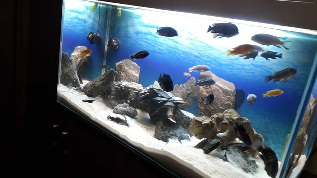 Akwarium 200 l optiwhite