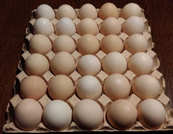 Jajka wiejskie duże