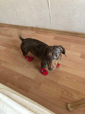 Buty dla psów wodoodporne, antypoślizgowe buty