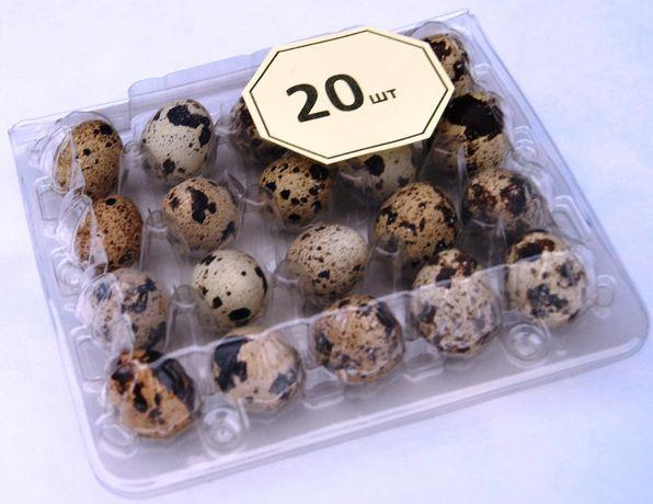 Перепелиные яйца пищевые (свежие, домашние, полезные)