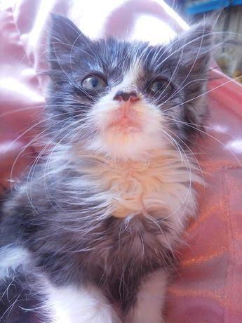 ОТДАМ! Маленькие пушистики котята в добрые руки котенок пушок малыш
