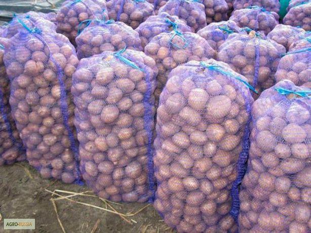 Доставка картошки до двери продажа