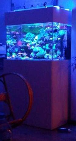 Akwarium morskie 200 litrów + sump, kompletne