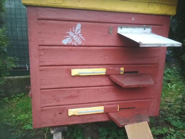Ule Warszawskie zwykłe kombinowane pszczoły pasieka