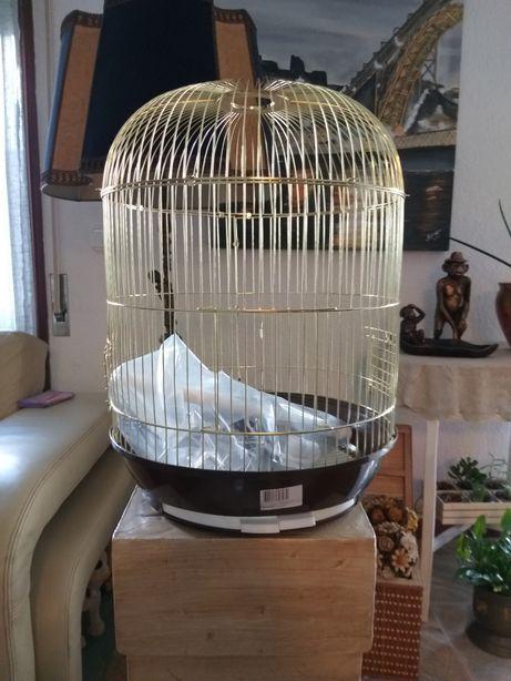 Gaiolas aves dourada nova