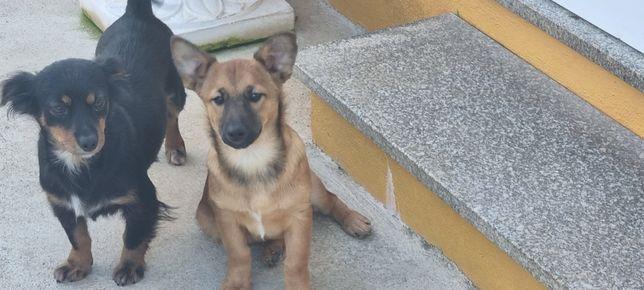 Dou cachorrinho de 6 meses