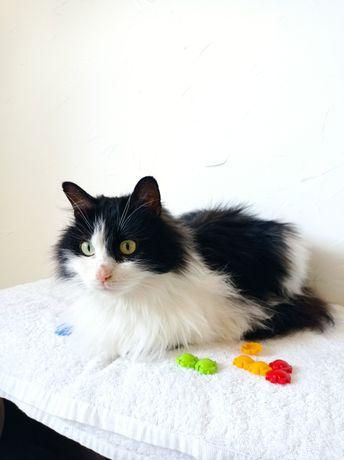 Пушистая крупная кошка