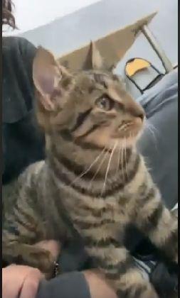 Grzeczny, lubiący ludzi Borys szuka domu z innym kotem