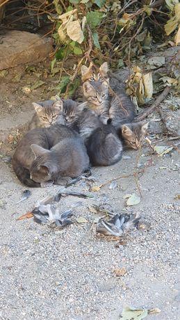 Красивые, здоровые Котята ищут свой дом
