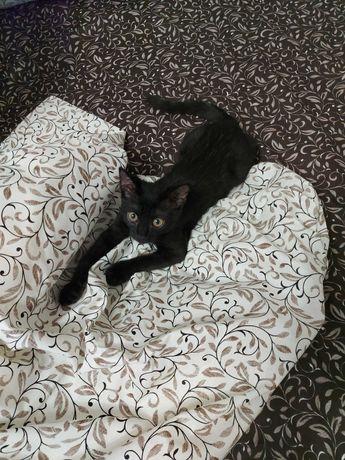 Чорний котенок 3,5 месяца