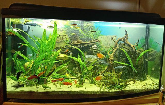 Akwarium 200l bez wyposażenia