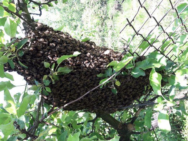 Sprzedam ule pszczoły rodziny pszczele