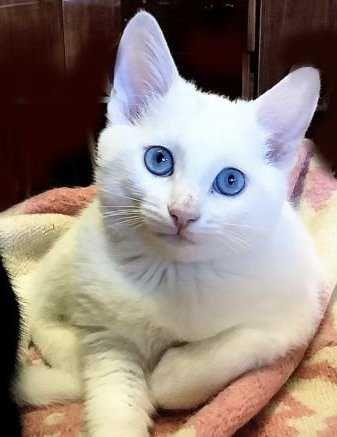 Милашка с голубыми глазами
