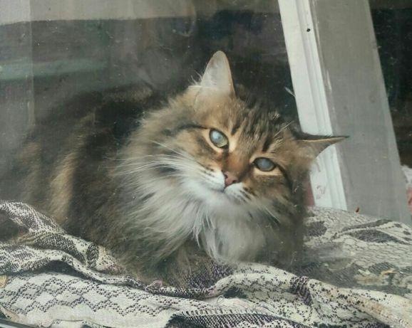 Срочно нужен дом для милой красивой кошечке