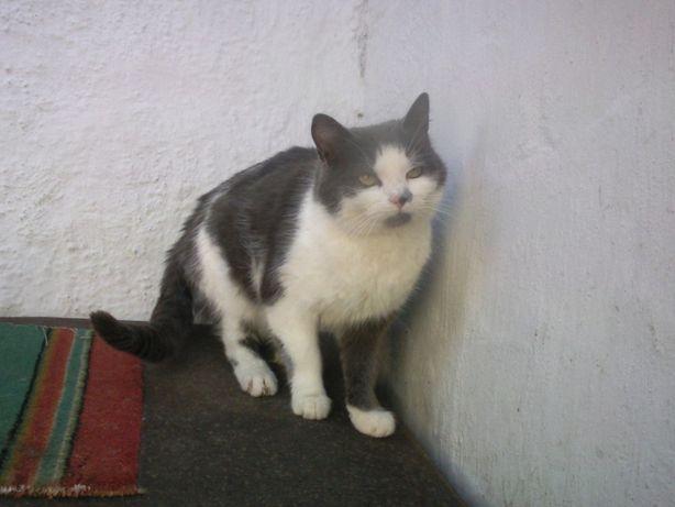 Ищет дом ласковый котик Василий, 3 годика. Ему негде жить..
