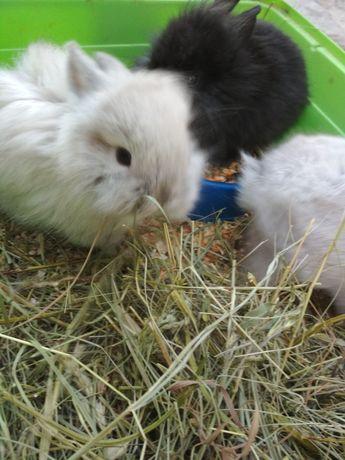 Кролик мини для удовольствия, релакс