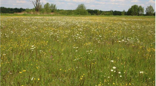 Sprzedam ziemię rolna - łąki w gminie Żelazków bardzo blisko  1.5 ha
