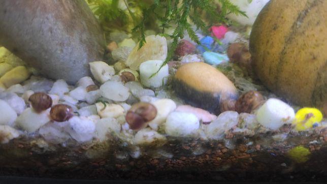 Caracóis e búzios aquário