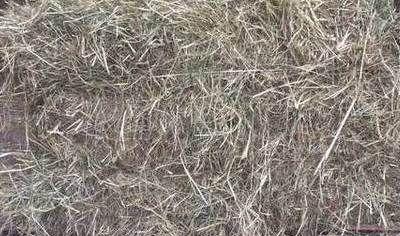 Sprzedam siano łąkowe w małych kostkach
