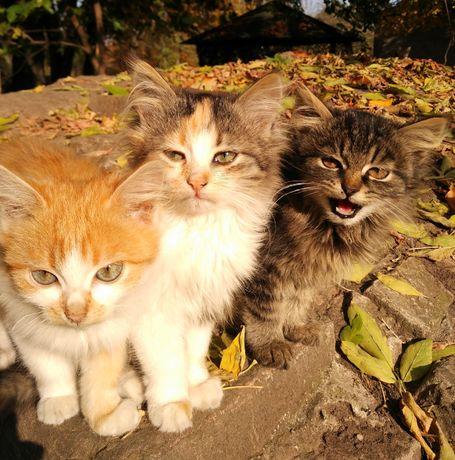 Котята в добрі руки