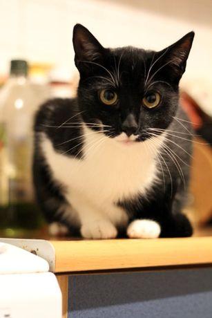 Kotek Felek szuka kochającego domu