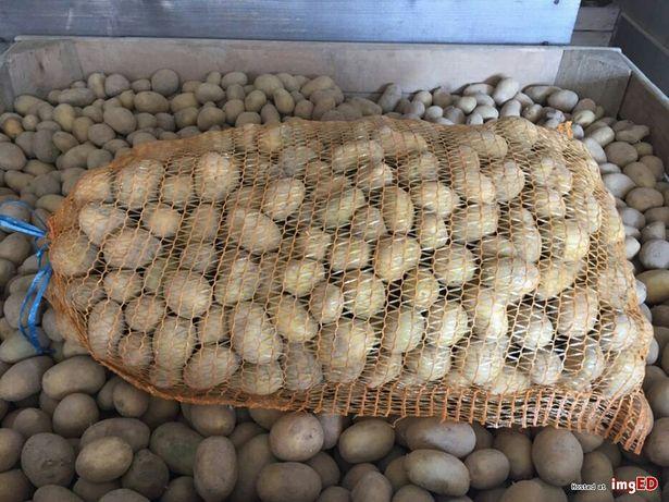Ziemniaki sadzeniaki denar 0,75