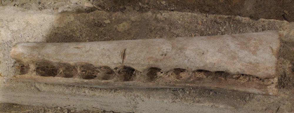 Osso de baleia antigo Urzelina (São Mateus) - imagem 1