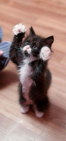 Котята! Пушистики 1месяц и 3 месяца