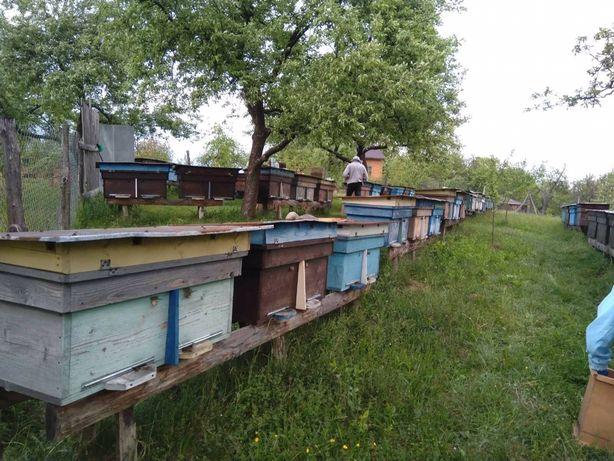 Пчелопакети