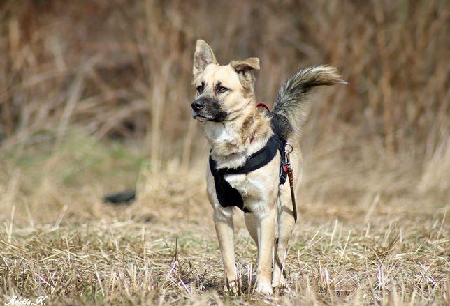 Dżeki - świety pies dla aktywnej rodziy