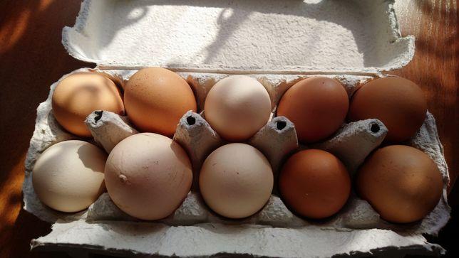 Jaja kurze ,wiejskie