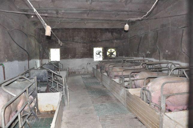 Продається діюча свиноферма (ферма, свинарник)