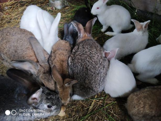 Продам кроликов смешанных пород