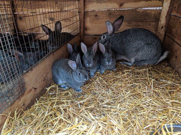 Продам кроликів оптом різних порід