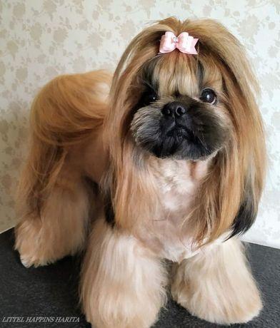 Стрижка. Груминг собак