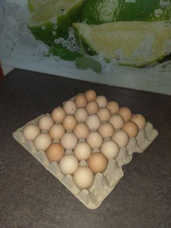 Wiejskie świeże  jajka