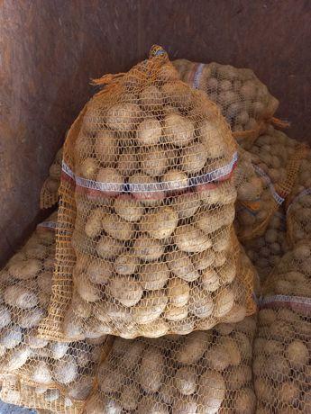 Ziemniaki Denar Soraya wiekość sadzeniaka kal. 35-50