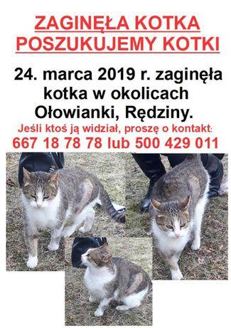 Poszukujemy zaginionej kotki :(