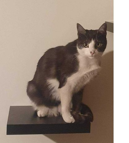 Zaginął  czarno biały kotek - Bytom ul. Matejki 13