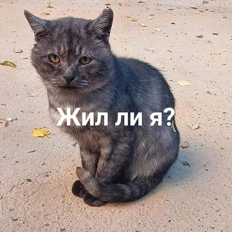 Очень печальный котик, выбросили