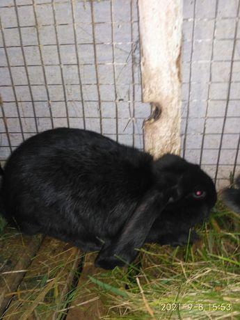 Кролики (мікси) ФБ
